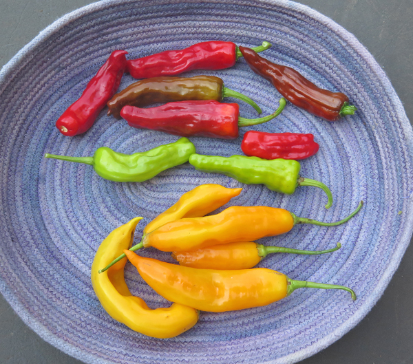 hot peppers for pickling