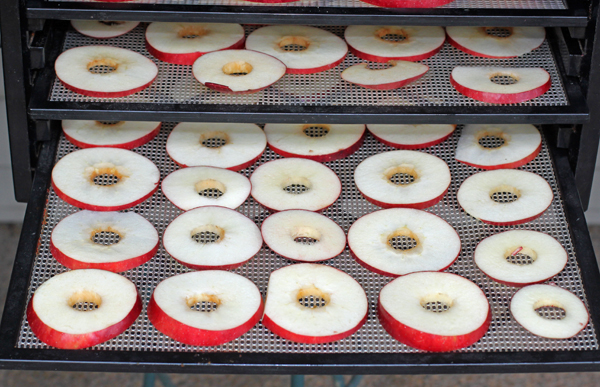 sliced Jonathan apples for dehydrating