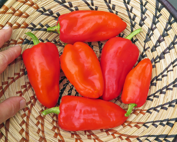 PCR Paprika peppers