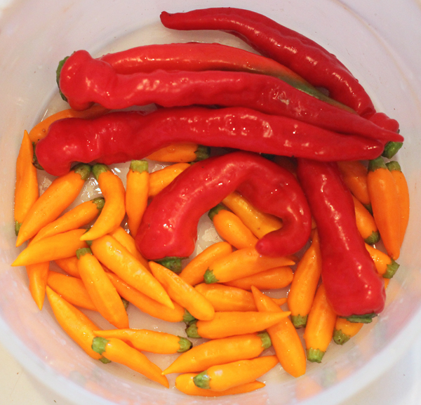 Maule's Red Hot and Aji Amarillo peppers