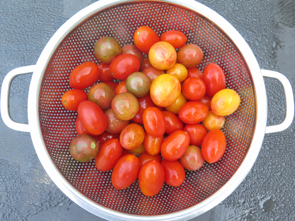 small fruited tomatoes for roasting