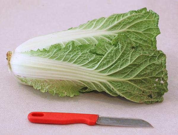 Minuet cabbage