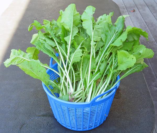 Nozawana turnip greens