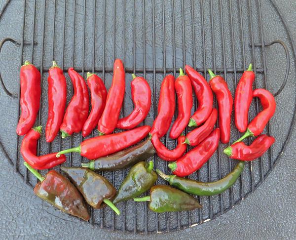 Dulce Rojo paprika peppers and Poblanos for smoking