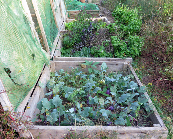 row of cold frame beds