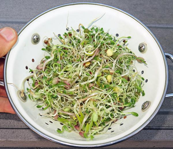 Zesty Dutch sprouts mix