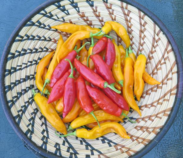 Aji Angelo and Aji Golden peppers