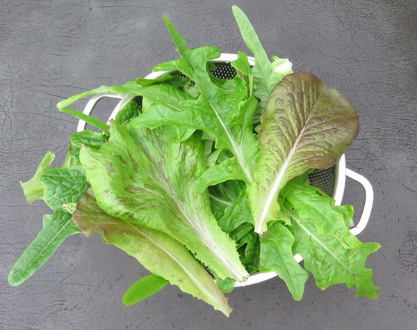 lettuce from salad box