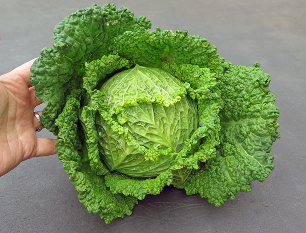 Melissa cabbage
