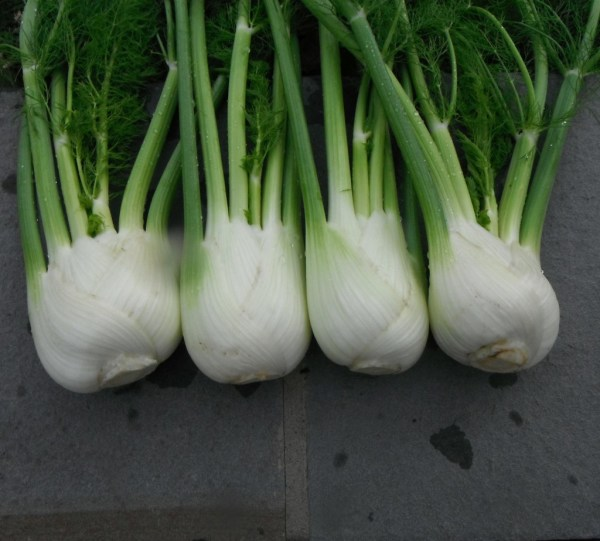 Fennel Antares F1