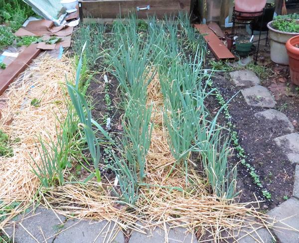 kitchen garden beds