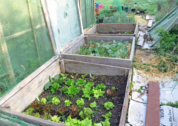 cold frame beds along greenhouse