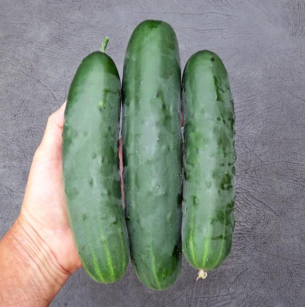 Corinto cucumbers