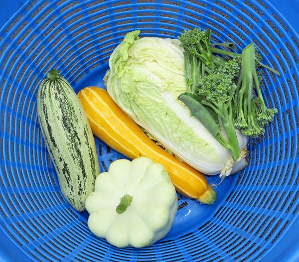 harvest of squash, cabbage and broccoli
