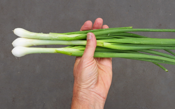Candy spring onions