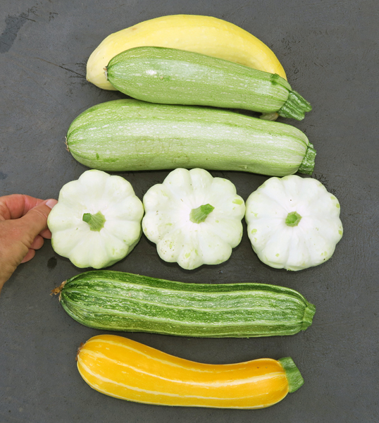 medley of summer squashes