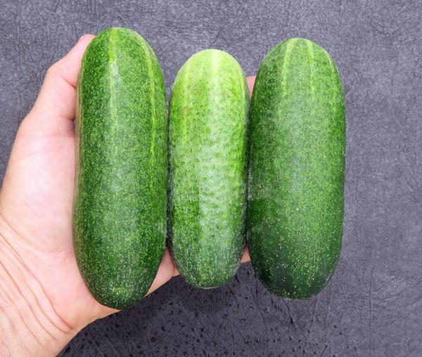 Harmonie cucumbers