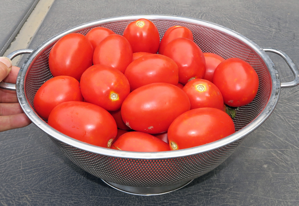 paste tomatoes for sauce