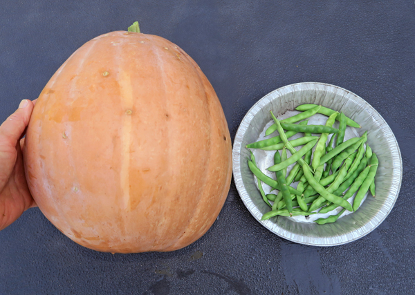 Dickinson pumpkin and greasy beans