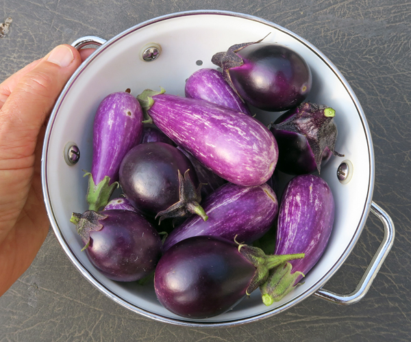 Patio Baby and Fairy Tale eggplant
