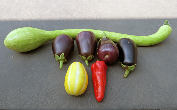 mixed harvest with tromboncino