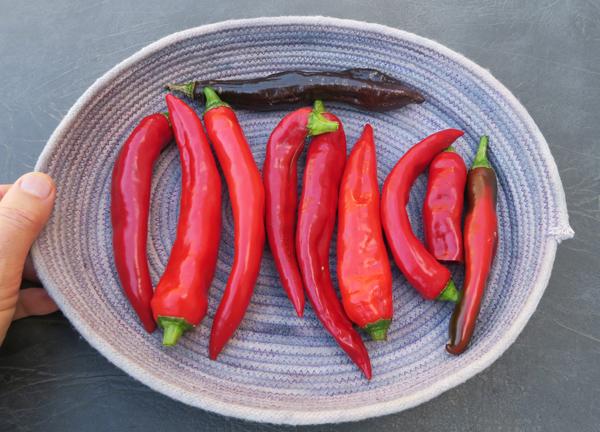 Aji Panca, Guajillo and Minero peppers