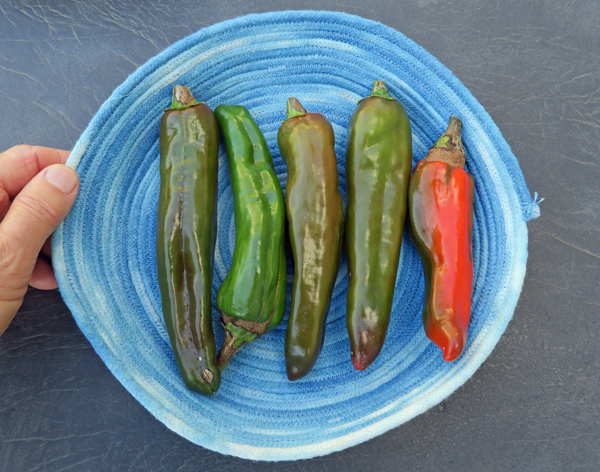 NuMex R Naky peppers
