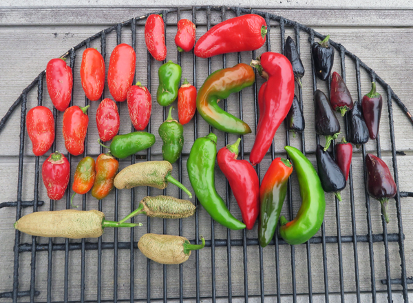hot peppers for smoking