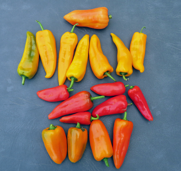 Cece, Cornito Giallo, Cornito Rosso, and Orange Blaze peppers