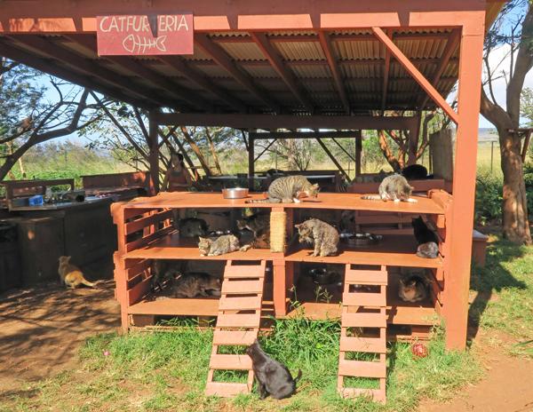 the Catfurteria feeding station