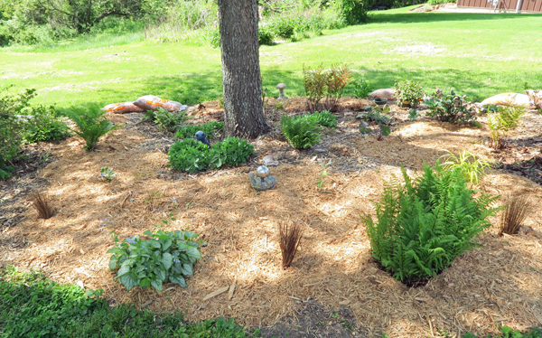 hosta area after replanting and mulching