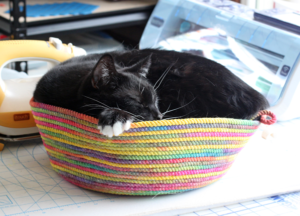 Ace in corded bowl