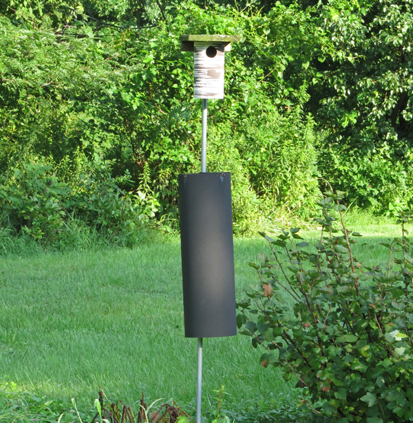PVC nest box on pole with predator guard