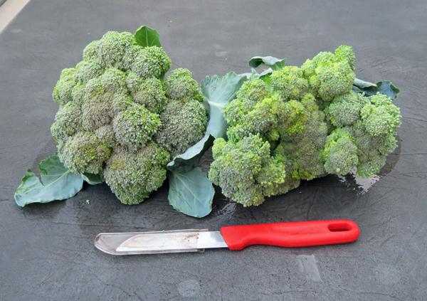 first broccoli