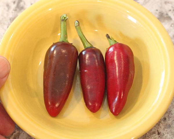 ripe Czech Black peppers