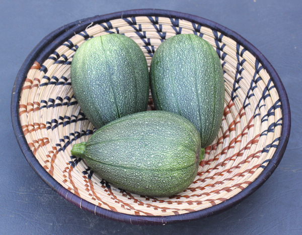 trio of Tatume squash