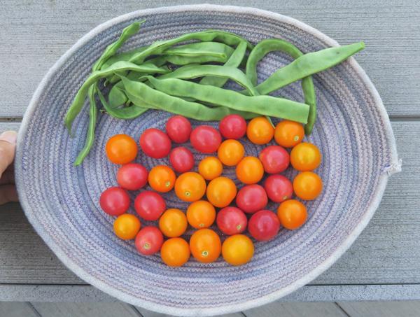 Musica beans, Sun Sugar and Sunpeach tomatoes