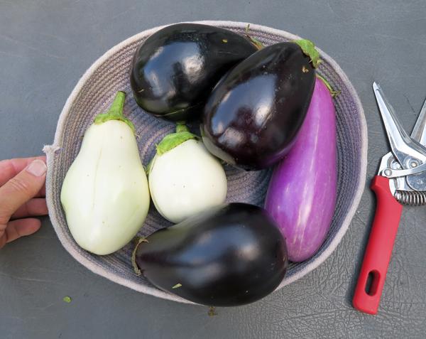 assorted eggplant