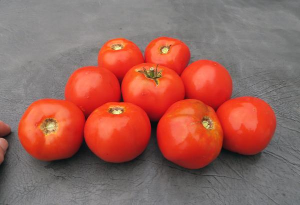 Garden Treasure tomatoes