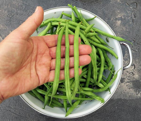 Castandel beans