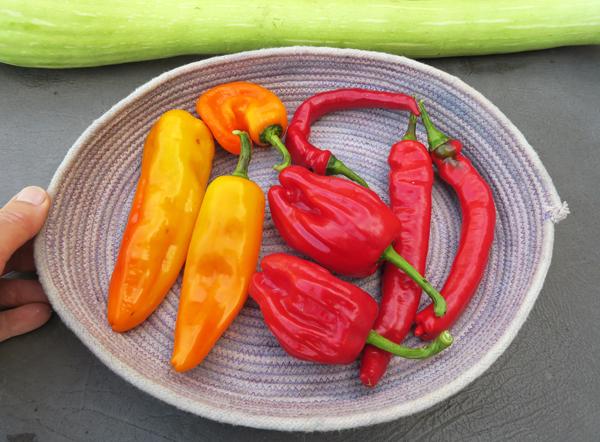 Criolla de Cocina and Jimmy Nardello peppers