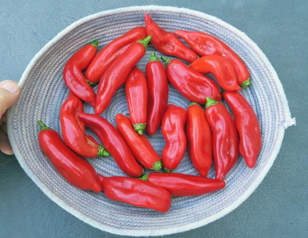 Kaleidoscope peppers