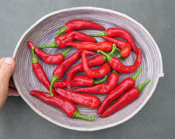 Red Ember peppers