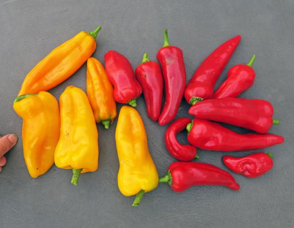Escamillo and Carmen peppers