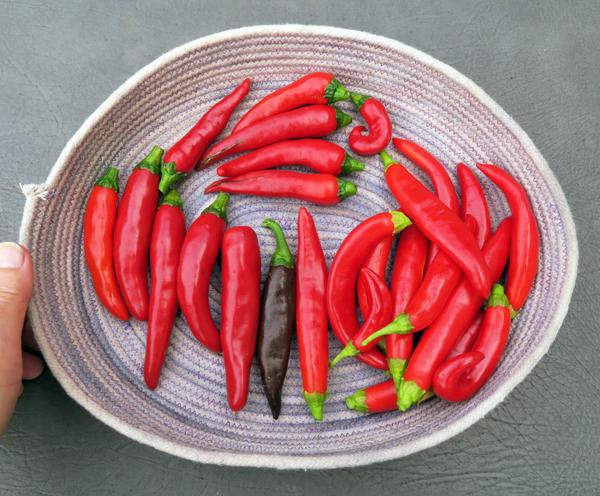Korean peppers