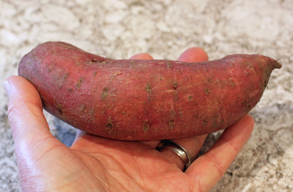 Carolina Ruby sweet potato