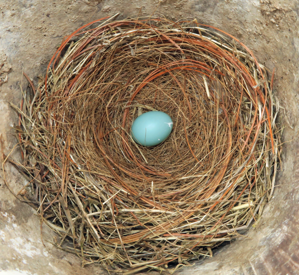 first bluebird egg of 2019