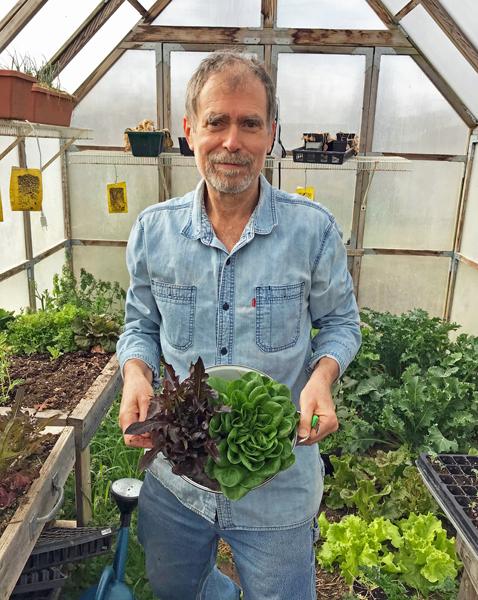 me harvesting lettuce