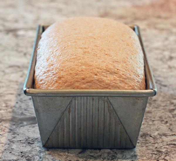 dough rising in loaf pan