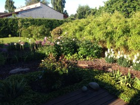 A backyard in Denmark